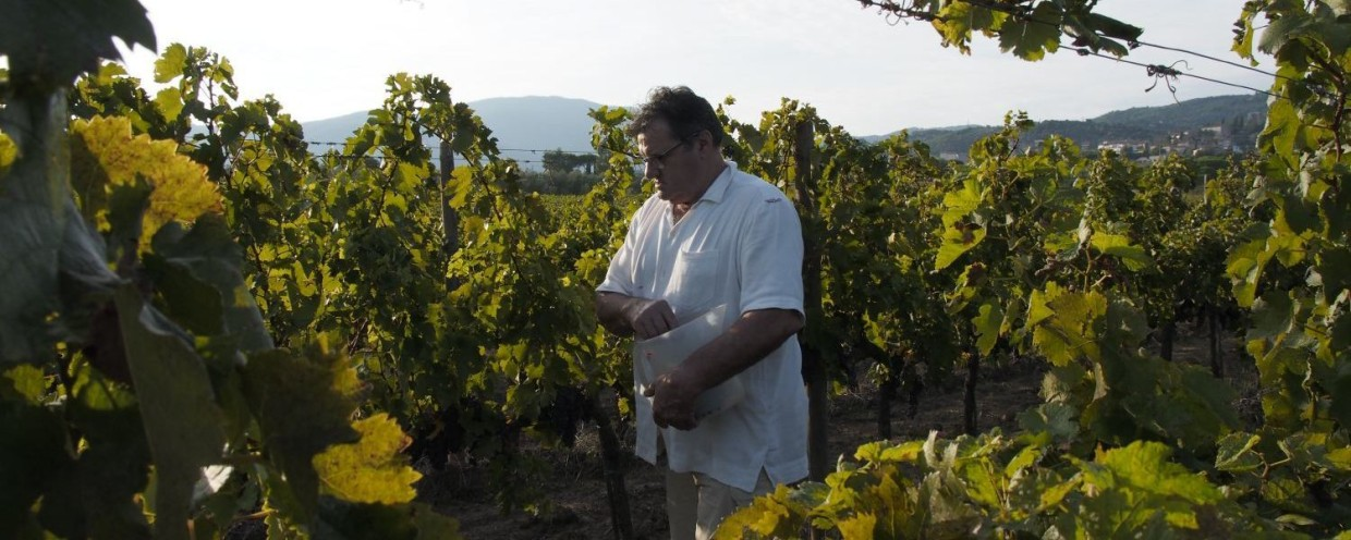 The Wineyards